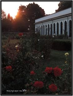 tramonto dal roseto